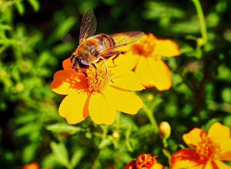 Natur Leben The Weekend On EyeEm Nature Natur Dorf The Week Of Eyeem Design Deutschland Berge Biene Fliege Gelb Blumen Insekten Insekt Bad Feilbach