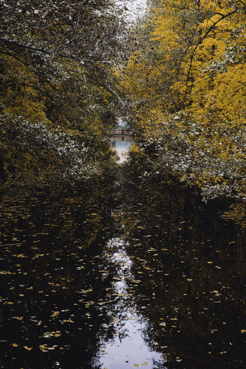 Autumn Autumn Colors Autumn Leaves Beauty In Nature Hometown Nature No People Outdoors Reflection Sweden Water