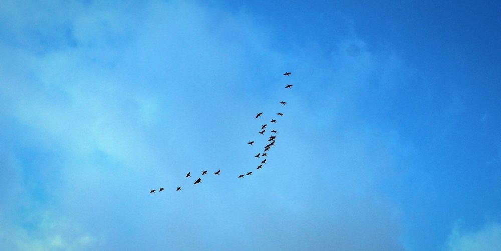 Bird Sky Flying