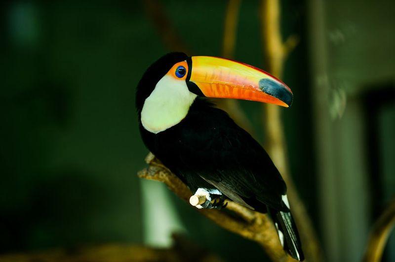 回眸一笑 鸟语花香 鸟类 鸟 动物园 动物世界 动物摄影 动物