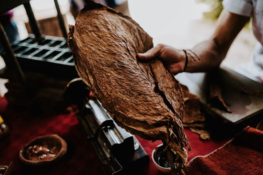 Tobacco leafs, turn them into cigars. Tobacco EyeEm Selects Real People Indoors  One Person Human Hand Hand Focus On Foreground Art And Craft Working
