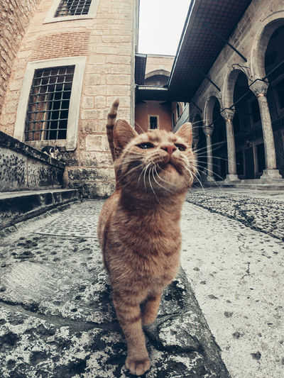 Cat looking away while sitting in city