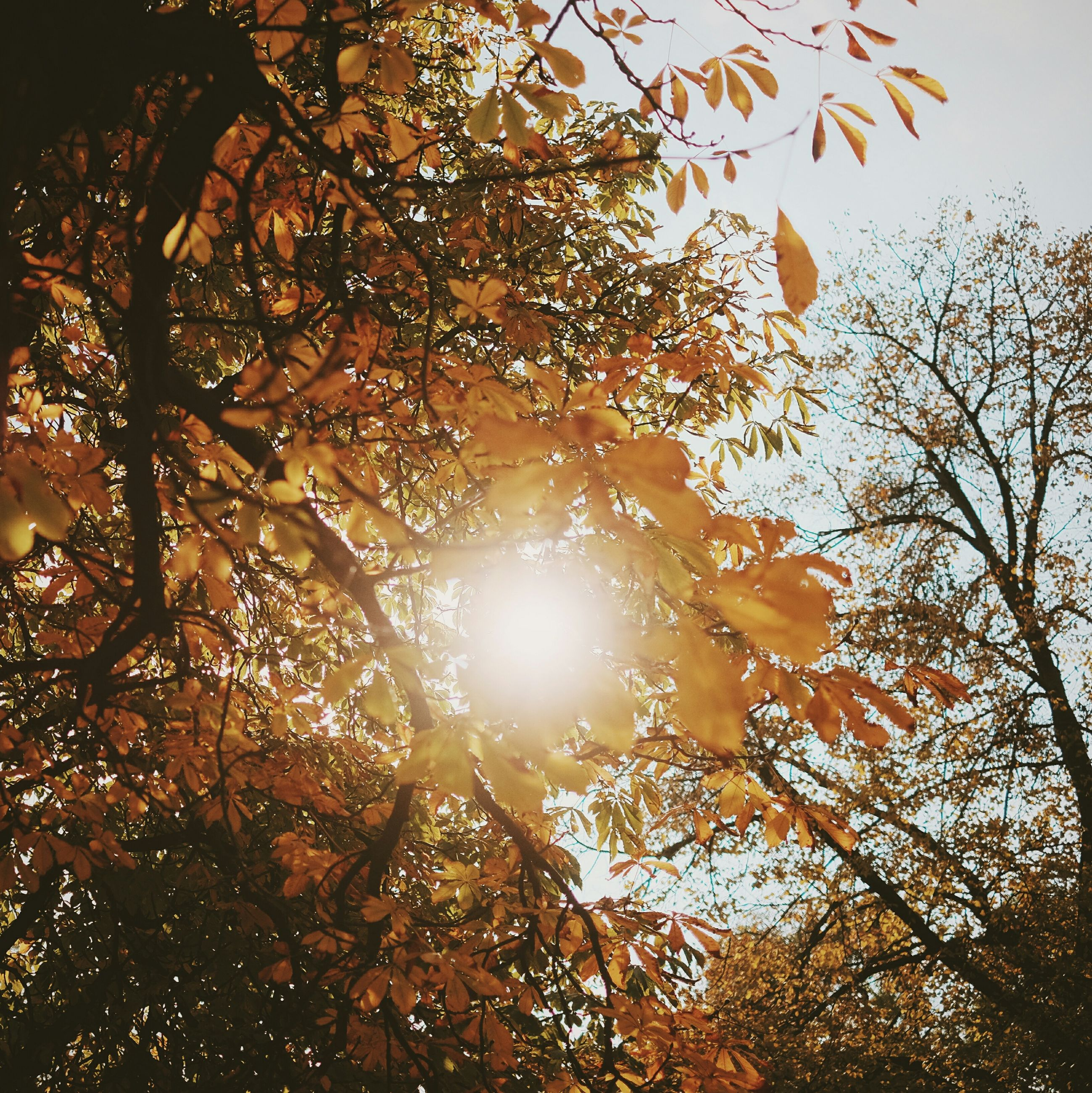 tree, sun, low angle view, branch, sunbeam, sunlight, tranquility, lens flare, nature, growth, beauty in nature, back lit, sky, silhouette, scenics, bright, outdoors, sunset, no people, leaf