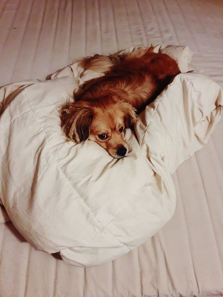 Pets Dog Animal One Animal Domestic Animals Puppy Cute Indoors  Animal Themes Mammal Pet Clothing Looking At Camera Young Animal No People Portrait Day
