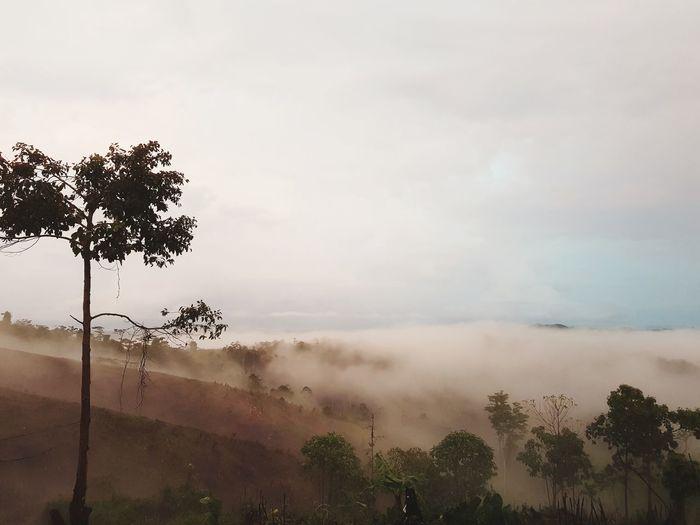 fog Tree Fog