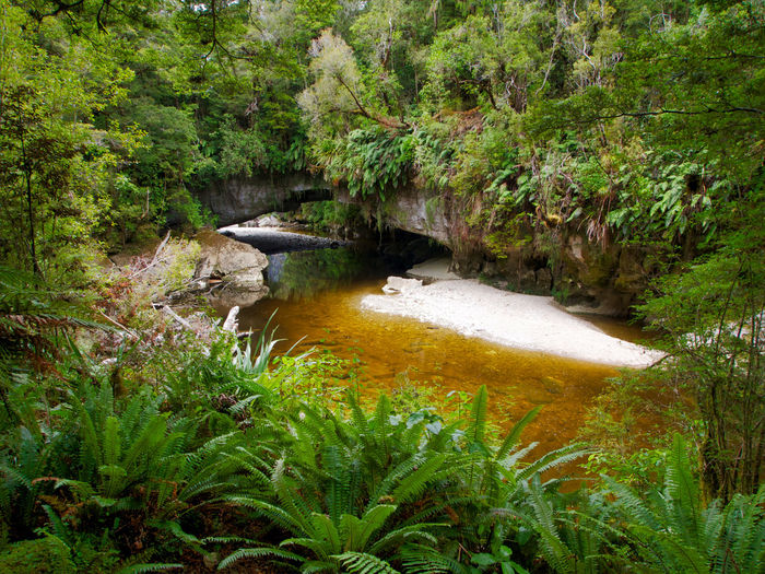 The Oparara Arch is one of a number of natural limestone tunnels formed by the Oparara River, Buller District, New Zealand near the town of Karamea. This view of the arch is deceptive because the interior of the tunnel is , large enough to accomodate a multi-story house. Dissolved taninns from the abundant foliage give the river this brown-gold colour river. Oparara Buller District New Zealand Landscape Beauty In Nature Day Ferns Forest Green Color Growth Nature No People Outdoors Plant River Riverscape Scenics Stone Arch Tranquility Tree Water EyeEmNewHere