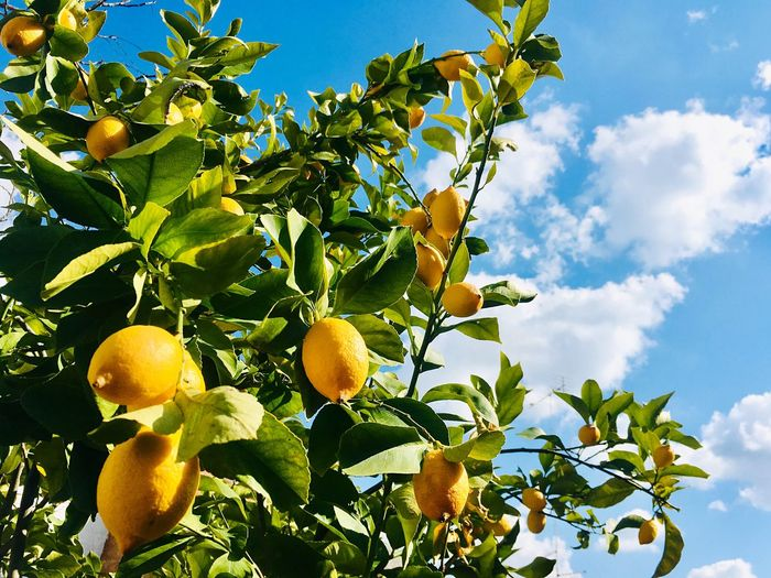 Vitamin C Yellow Ripe Leaves Lemon Sky Healthy Eating Fruit Tree Cloud - Sky Growth Food And Drink Citrus Fruit Low Angle View Food Nature Fruit Tree Leaf