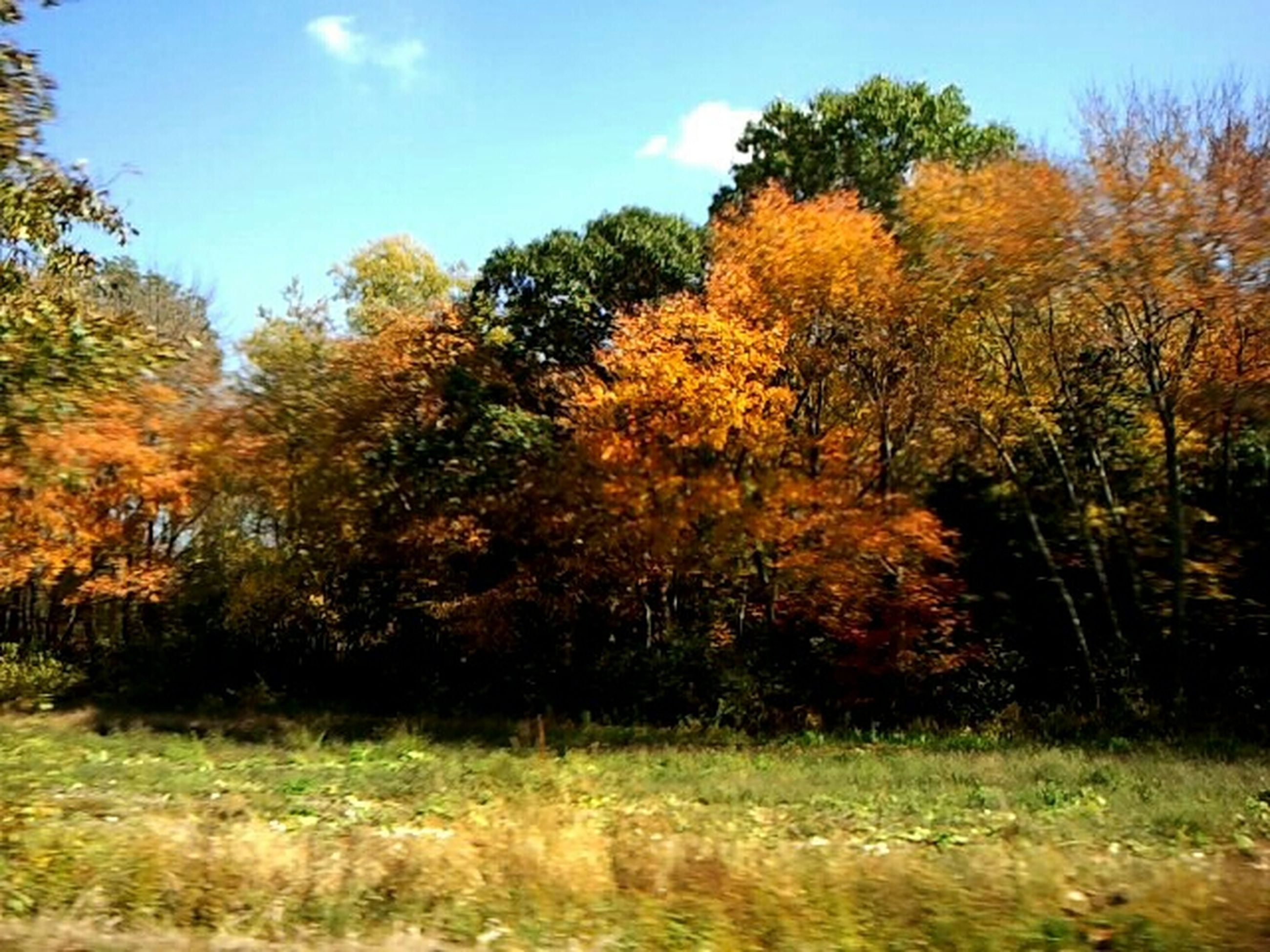 tree, autumn, tranquility, tranquil scene, growth, beauty in nature, change, field, nature, scenics, landscape, grass, season, sky, orange color, non-urban scene, grassy, forest, idyllic, outdoors