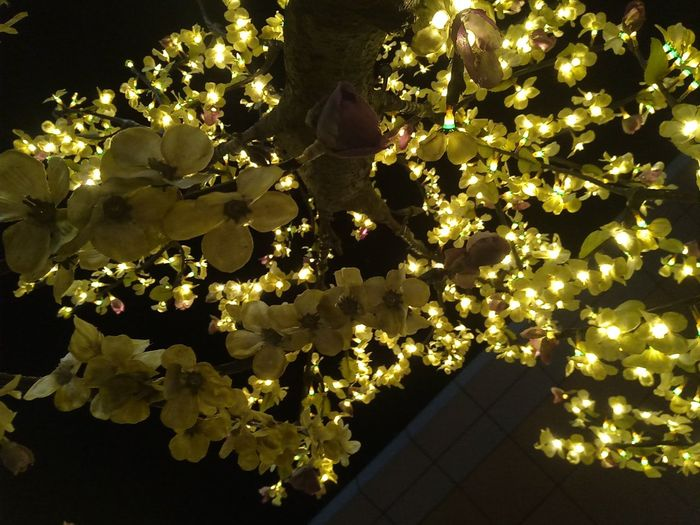 No People Variation Close-up Gold Colored Shiny Gold Precious Gem Refraction Night Indoors  Tress Christmas