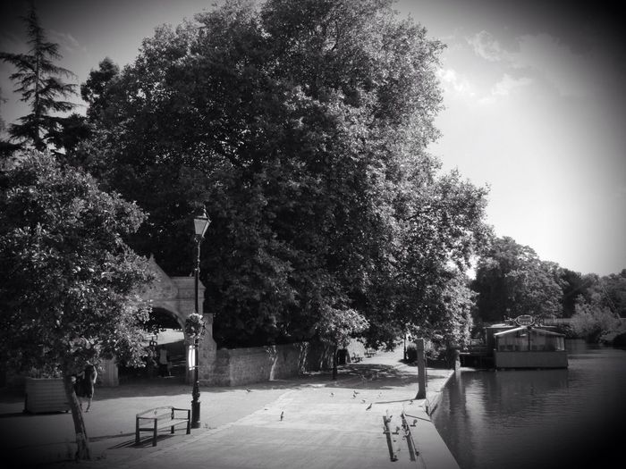 Riverside View Street Light Trees Water Outdoors Day Blackandwhite Pedestrians Pigeons Arch River Cafe