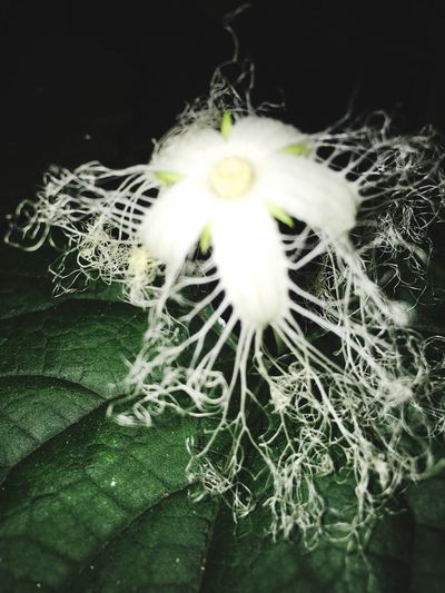 Enjoying Life 花 Flowers Nature EyeEm Nature Lover 闇属性