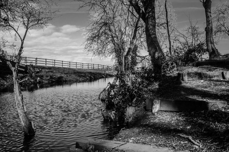 The view from a friend's garden... this lake, the trees and the fences so define the English countryside. Black and white photos, in the otherwise very similar countryside, makes these stand out because of the textures and lines that get highlighted by taking away the colours. Black And White Black And White Landscape Black And White Scenery Bridge - Man Made Structure Calm Country Countryside Day English Countryside Geometry Lake Nature Nature No People Outdoors Reflection Relaxing Rural Sky Soothing Steps Tree Water WoodLand Woods The Great Outdoors - 2017 EyeEm Awards