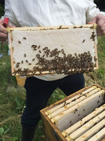 Beehive APIculture Bee Honey Honeycomb Large Group Of Animals Insect One Person Day Outdoors Human Hand Adult People