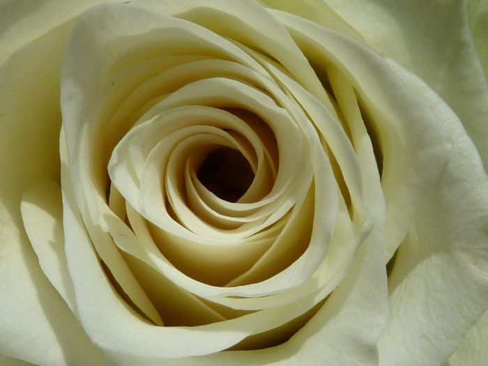 Closeup White