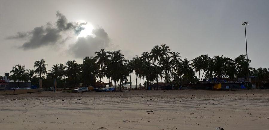 Beachphotography Beach Day Sun Sunset Sunlight Sunset_collection Sunny Trees Tree Area TreePorn Trees And Sky Tree_collection  Sandy Sandy Beach Sand Dune Tree Palm Tree Beach Sand Oil Pump Sky Landscape Cloud - Sky