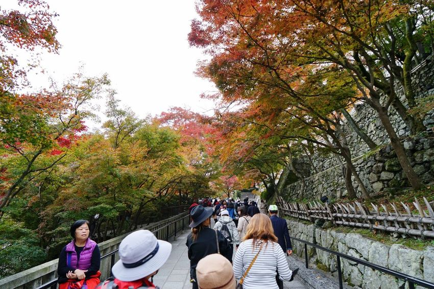 Tree Men Mid Adult Leisure Activity Mid Adult Men Outdoors Autumn Women Nature Lifestyles Beauty In Nature Real People Son Adult Day People Togetherness Large Group Of People Baby Stroller Adults Only in Kyoto, Japan