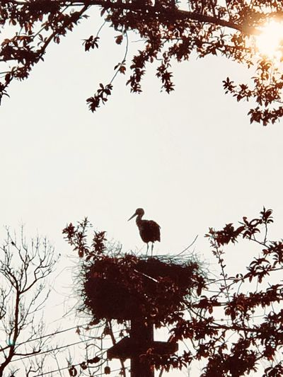 stork and