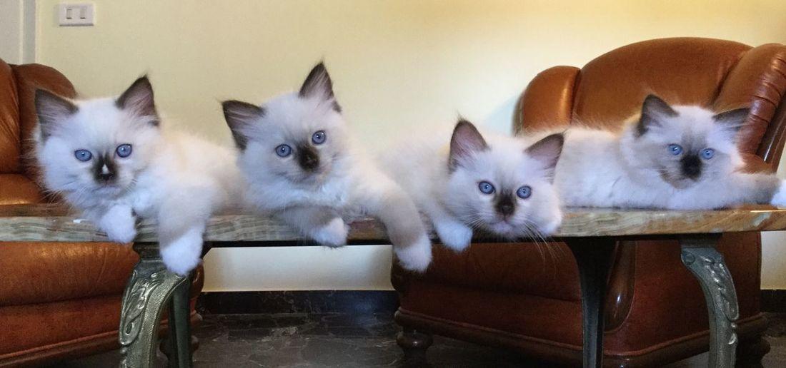 Cat and thè