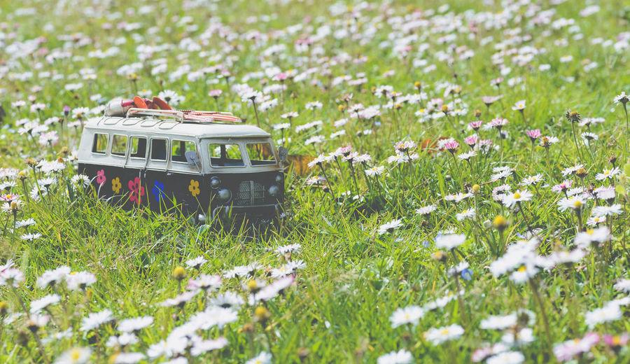 Flowering plants on field