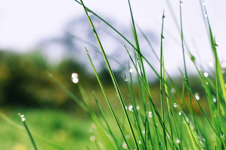 By the grass Water Defocused Flower Summer Drop Springtime Wet Close-up Grass Plant Blade Of Grass Dew
