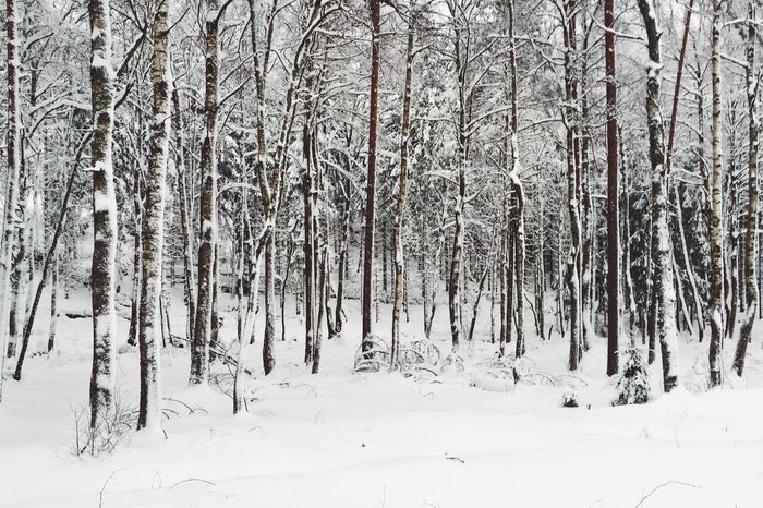 Standing straight Winter Snow Cold Temperature Nature Tranquil Scene Tranquility White Color Beauty In Nature Forest No People Tree Scenics Landscape Outdoors Day Bare Tree Shades Of Winter