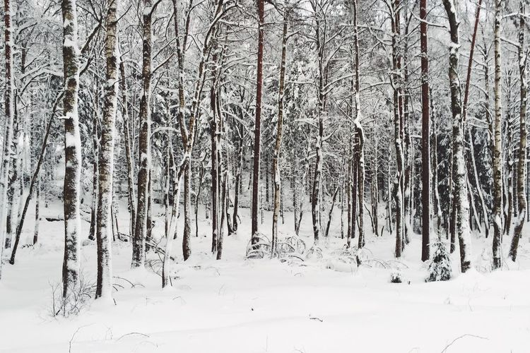 Bare trees in forest during winter