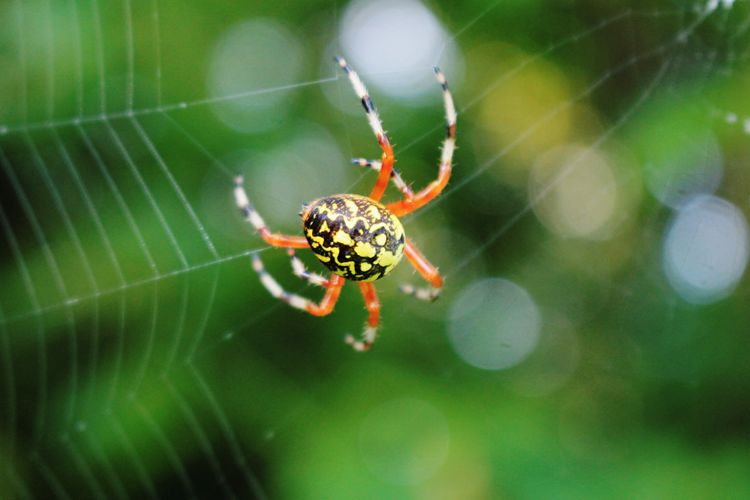 Writing Spider EyeEm Nature Lover EyeEmNewHere One Animal Nature Close-up Web Animal Wildlife Outdoors Beauty In Nature Animal Leg Day