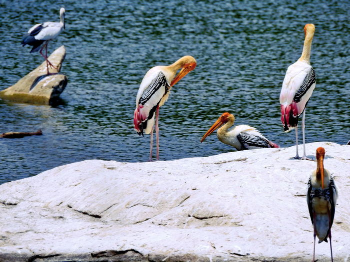 Animal Themes Animal Wildlife Animals In The Wild Beak Bird Day Horizontal Large Group Of Animals Nature No People Outdoors Pelican Perching Water