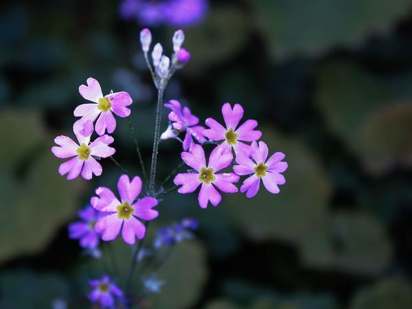 EyeEmNewHere Flower Flowering Plant Fragility Vulnerability  Freshness Plant Petal Beauty In Nature No People Botany Nature Growth Flower Head