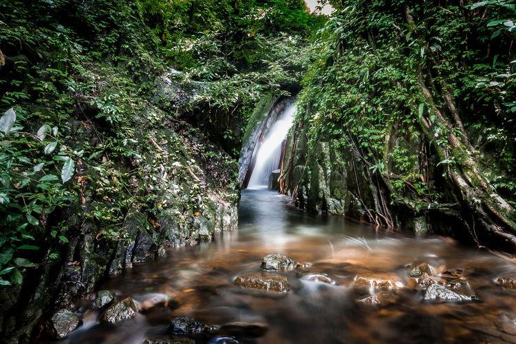 Beauty In Nature Flowing Flowing Water Forest Kokedokwaterfall Tree Water Waterfall