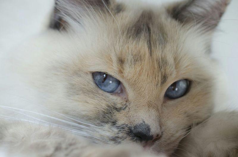Close-up of furry cat