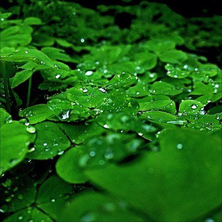 Drops Instalovers_gr IPhone Mytilene Rain Green Greece Drops Photooftheday Nofilter Igers Photoday Ubiquography Mytilini