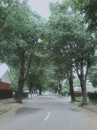 Walkonthestreet Tree Street Goodday ♡ Photography