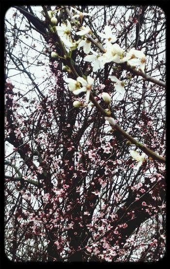 Les Fleurs Du Mal Hello Spring <3