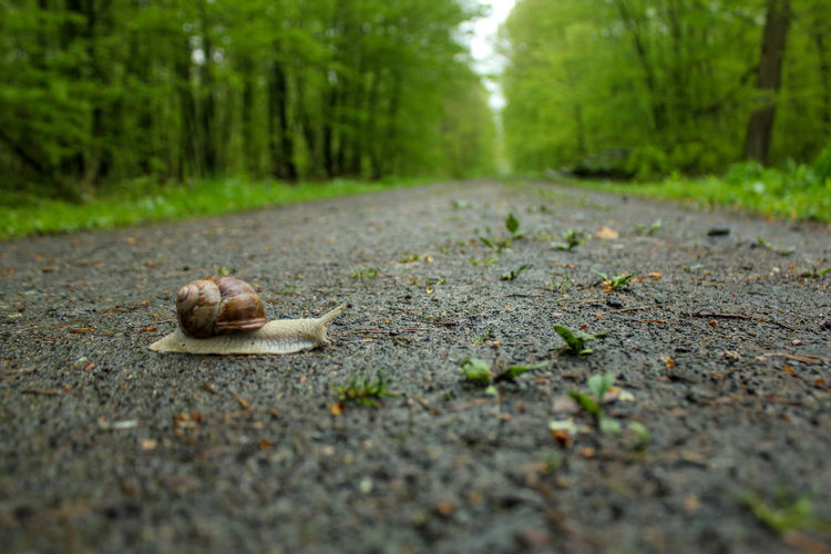 Slow and steady cross the road Snail Slow Slow Life Animal Forest Forest Road One Animal Animals In The Wild Nature Selective Focus Transportation Footpath Surface Level No People Outdoors
