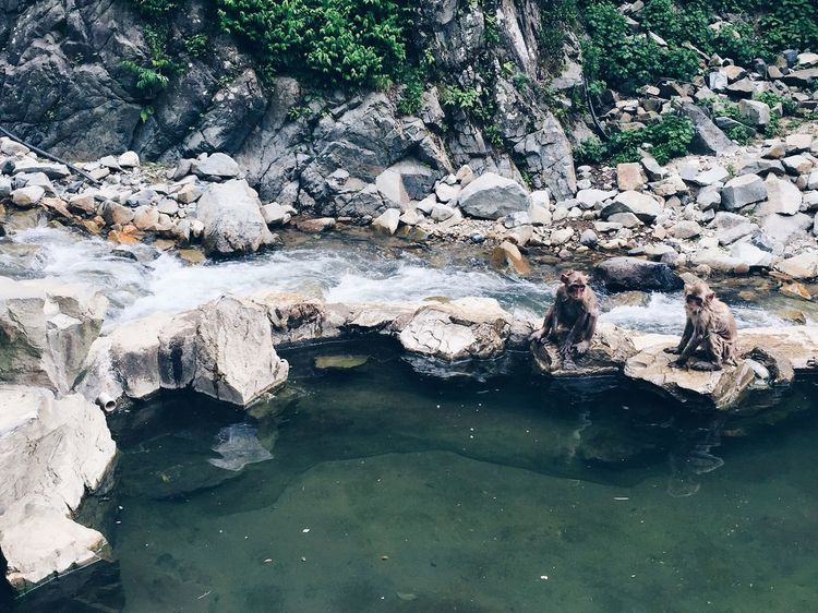 Monkey spa Water Rock - Object Nature No People Waterfront Tranquility Tree Day Outdoors Beauty In Nature Waterfall Monkey Monkey Spa Outdoor Spa Monkey Forest Monkey Bathing Animals In The Wild Animals Bathing Natural Habitat Wet Monkey Snow Monkey Japan Riverbank Cute Adorable