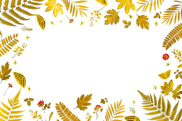 Frame from yellow leaves and dry leaves and dry flower on white background for isolated, Frame by tree leaf and fern leaf and free space for text on white background for cut of Dead Tree Dry Leaves Isolated Tree Leaf Yellow Leaves Dead Dead Plant Dry Dry Flower  Dry Leaves Texture Fern Fern Leaf Flower Flowers Frame Free Space Free Space For Text Isolated On White Isolated White Background Leaf Leaves White Background