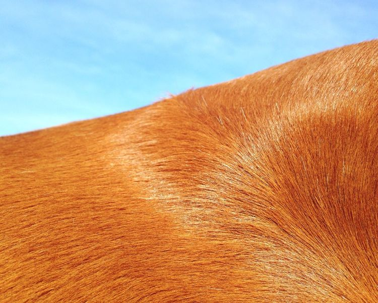 Horse Macro of sortts, Abstract Colors Blue Sky Chestnut RIP