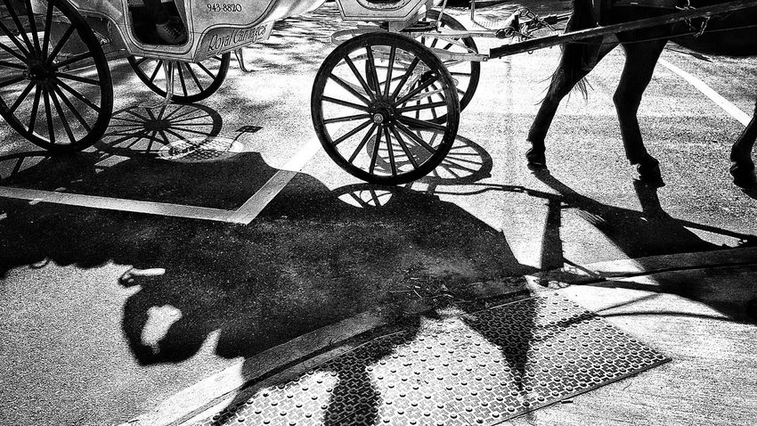 Black And White Blackandwhite Photography Light And Shadow Street Photography Blandwhite Horse Carriage Shapes And Patterns  Shadows & Lights