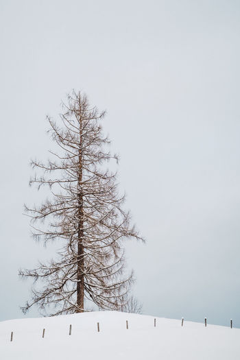 Alone Bare Tree Beauty In Nature Branch Clear Sky Cold Temperature Day Frozen Landscape Low Angle View Nature No People Outdoors Scenics Sky Snow Snow On Trees Tranquil Scene Tranquility Tree Weather Winter