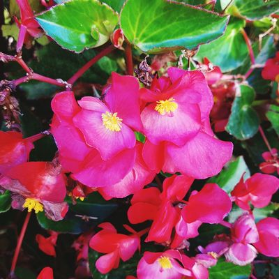 Flower Nature Beauty In Nature Plant Growth Pink Color No People Day Outdoors Leaf Petal Flower Head Close-up Fragility Freshness