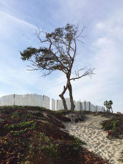 Tree on top of sand dune