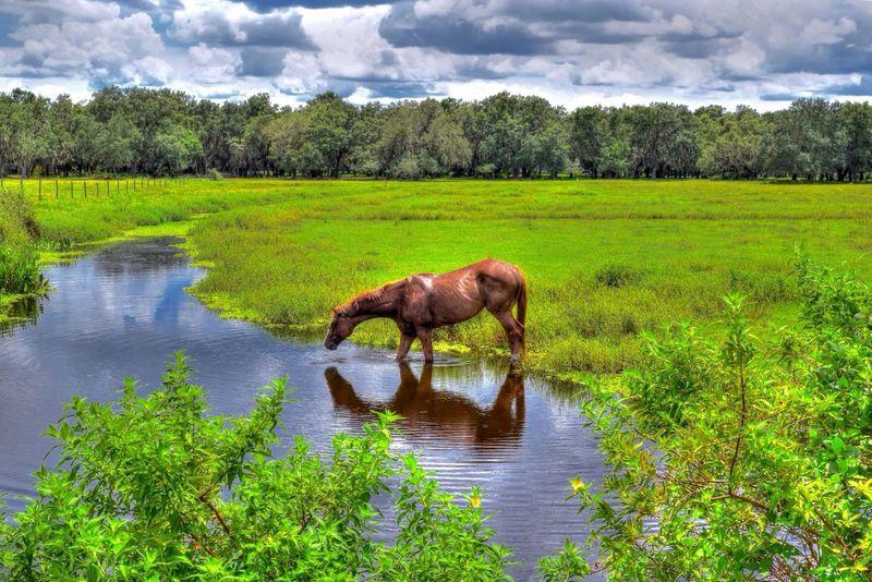 Eyeemnaturelover Tadaa Community EyeEm Animal Lover Eyeembestshot_landscape