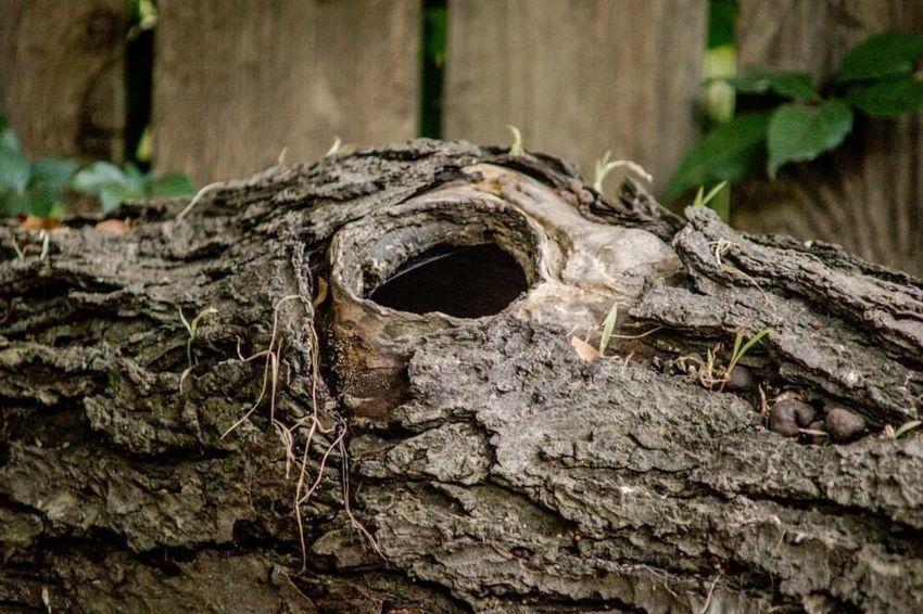 Log Wood Fallen Tree