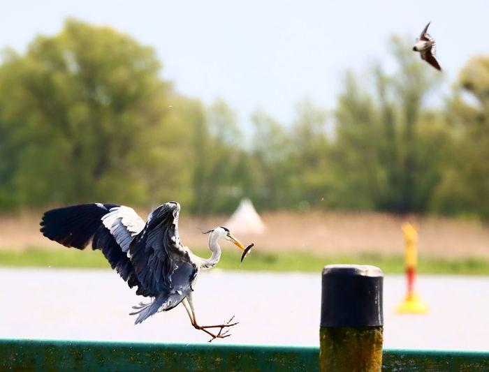 Bird flying over wooden post