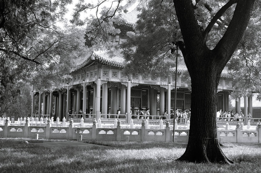 Architectural Column Architecture Bare Tree Biyong Black And White Built Structure Chinese Chinese Culture Column Day Education Empty Exterior Façade Grass Growth Imperial University Lawn Nature Outdoors Sky Traditional Traditional Culture Tree BEIJING北京CHINA中国BEAUTY