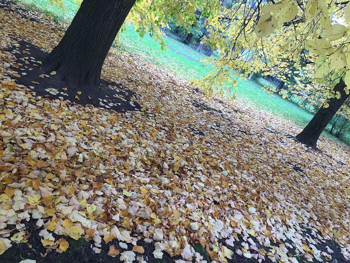Autumn Tree Trunk Season  Nature First Eyeem Photo