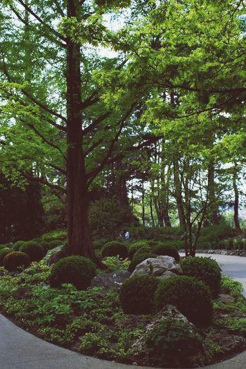A Walk In The Park Green Tree_collection  Japanese Garden Beautiful Day Beautiful Nature EyeEm Nature Lover EyeEm Best Shots - Nature Dreamland Margaret Island