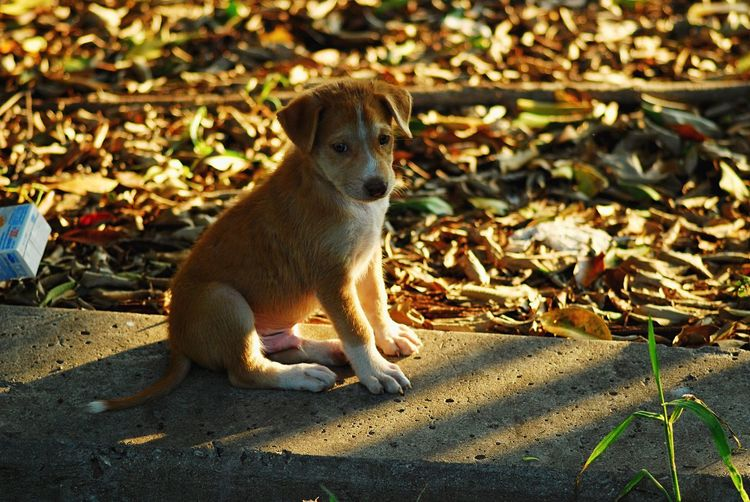Sad puppy Brown Shadows & Lights Dry Leaf Little Dog Animal Themes Animal One Animal Sunlight Animal Wildlife Mammal Animals In The Wild No People Shadow Outdoors Day