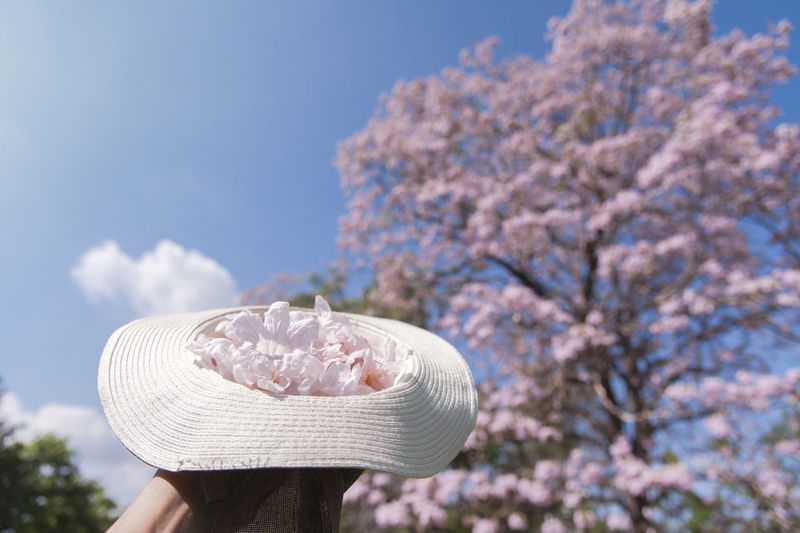 Close-up of hand holding cherry blossom against sky